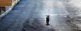 Mehmet Çağlarer Sokağın Güzelleri Kediler Sergisi afiş