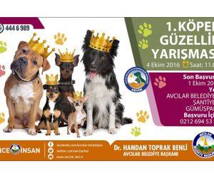 1.Köpek Güzellik Yarışması