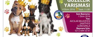 1.Köpek Güzellik Yarışması afiş