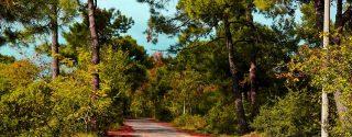 Ağacın Şarkısı Tiyatro afiş