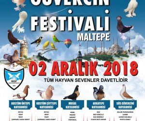 2. İstanbul Güvercin Festivali