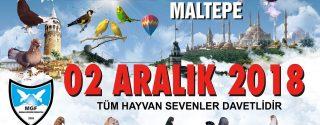 2. İstanbul Güvercin Festivali afiş